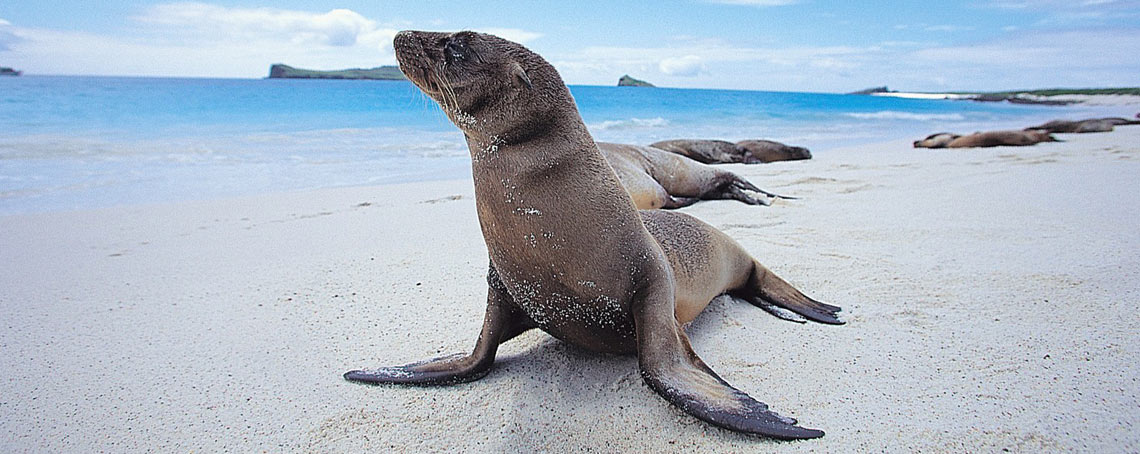 The magic of nature with Silver Galapagos